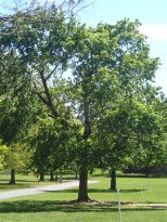 Princeton Abbey Grounds