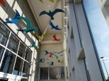 Flying gulls overhead!