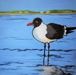 SOLD Laughing Gull 12 x 12 Acrylic