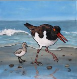 Oystercatcher and chick, 12 x 12 Acrylic $150 Framed