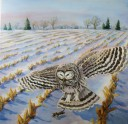 Dawn Hunt: Barred Owl, 30 x 30, Mixed Media