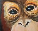 Popi: Orangutan, 20 x 24