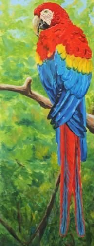 A Study in Scarlet: Scarlet Macaw, 16 x 40, Acrylic